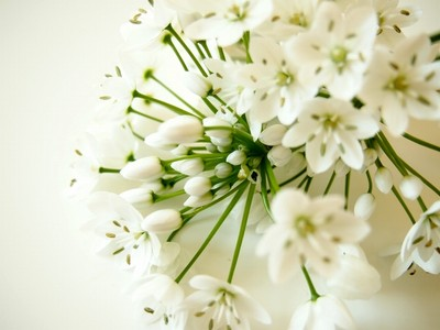 1832214白い花.jpg