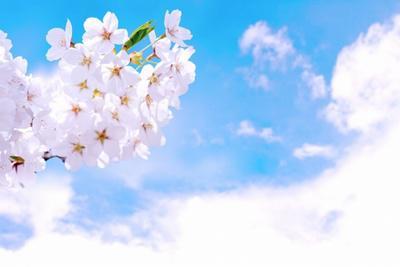 体験談234桜.jpg