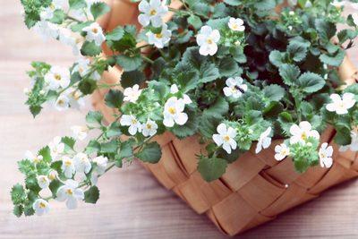 ba685c73d22ea2396bb2c2d16d6f47b1_s白い花.jpg